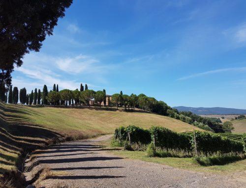 Altesino, Montalcino, Toscana…