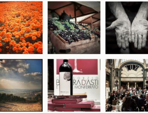 Barbera d'Asti et Monferrat, des vins emblématiques du Piémont