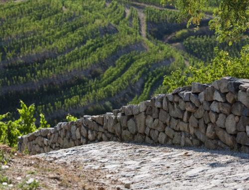 2018 est le quatrième grand millésime d'affilée pour les vins du Rhône