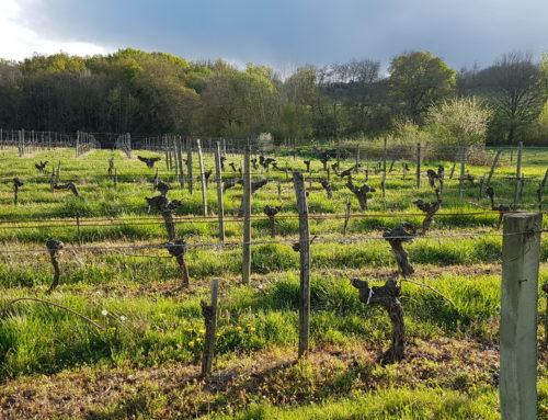 Cotes de Bordeaux : des vins fruités et abordables
