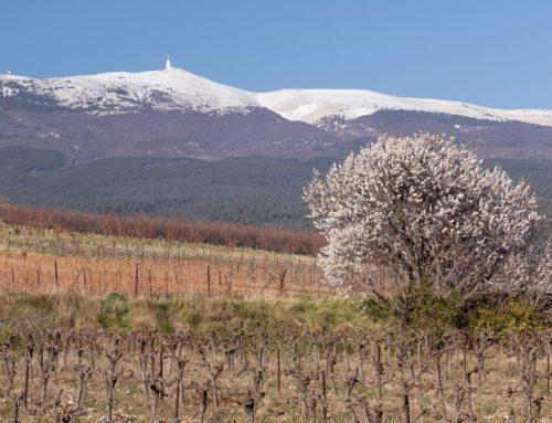 Les vins de l'appellation Ventoux